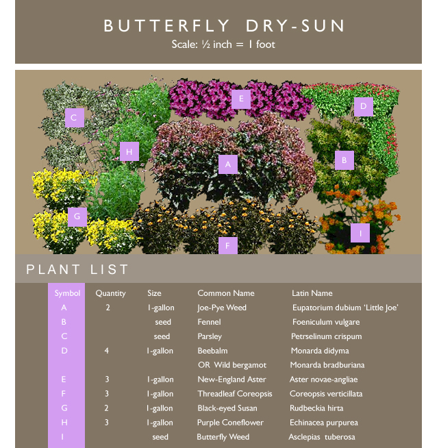 Delightful View Butterfly Garden (Sun) Template .